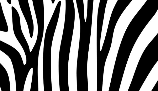 Zebra stripes design